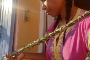 Katyana LABS Artemisia  Herbs work